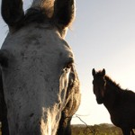 Web Banner Horses