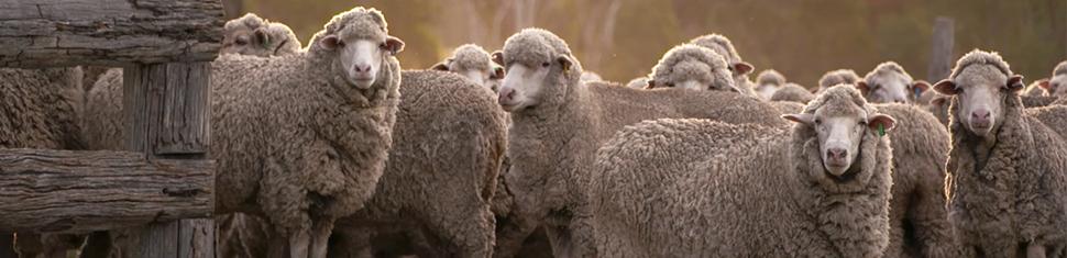The_Flock2